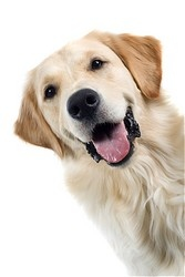 Oceanside Veterinary | Oceanside Vaccinations - Dogs | CA | Oceanside Veterinary Hospital |